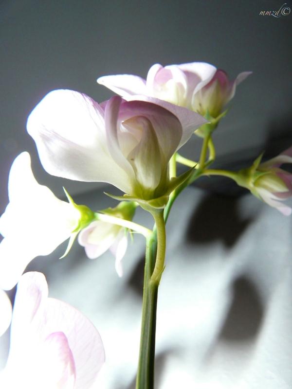 kwiats_102